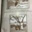 ภาพเก่าเล่าเรื่องเมืองระยอง. หนังสือภาพเก่าระยอง มรดกจากอดีต สู่ปัจจุบัน. thumbnail 42